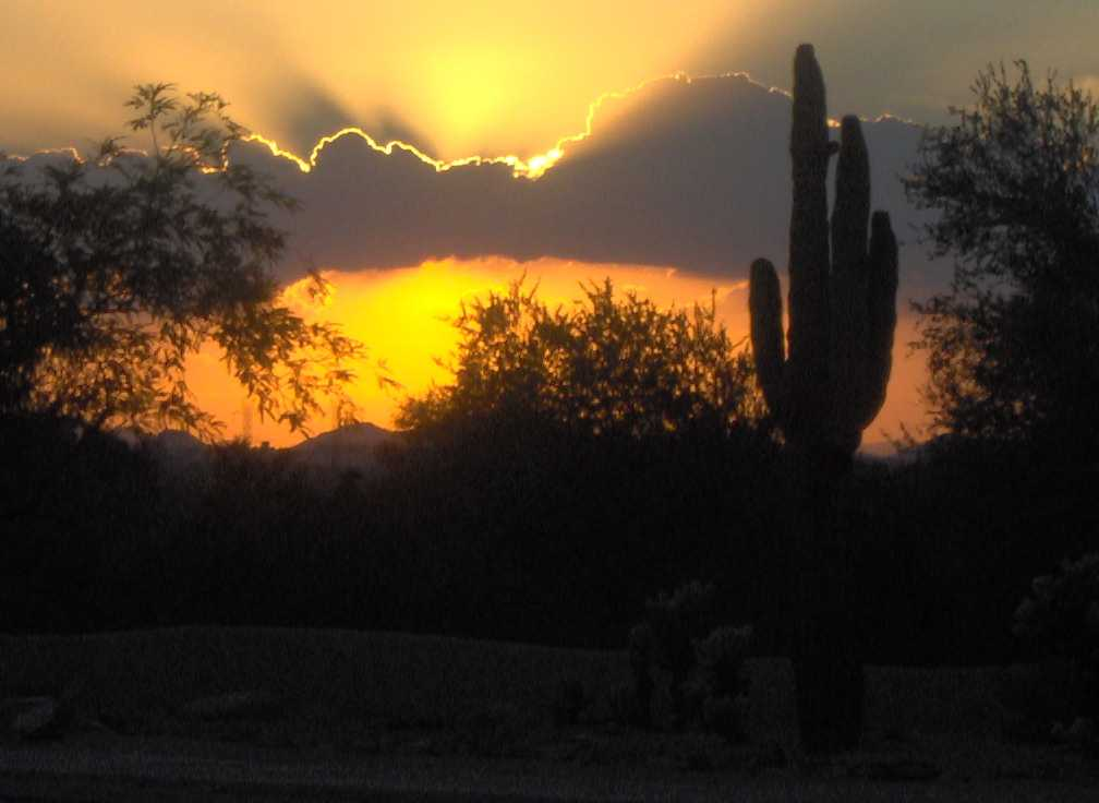 Sunset and cactus